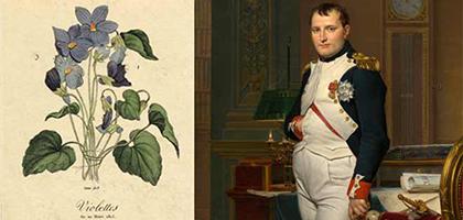 معرفی گل بنفشه ، گل محبوب ناپلئون بناپارت