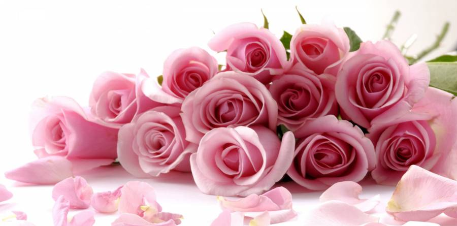 -beautiful_roses